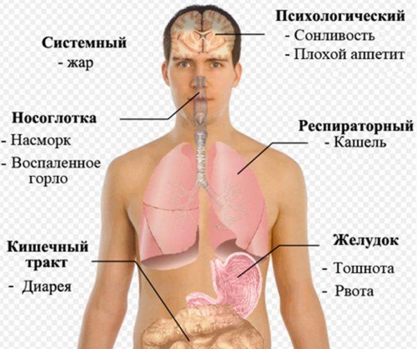 Симптоми кишкового грипу