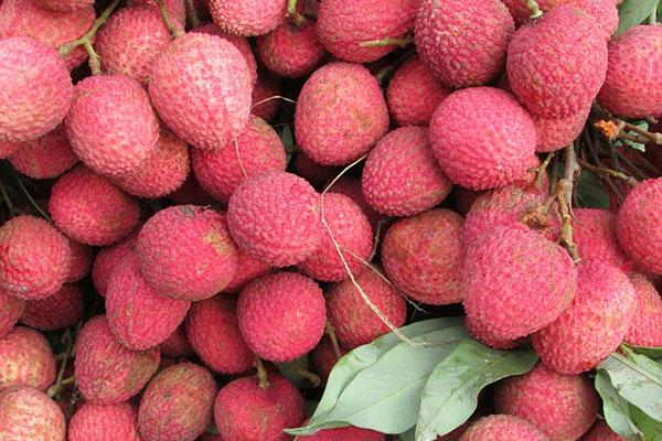 корисний фрукт лічі