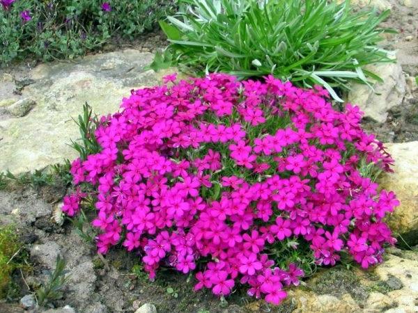 які квіти садять на могилах