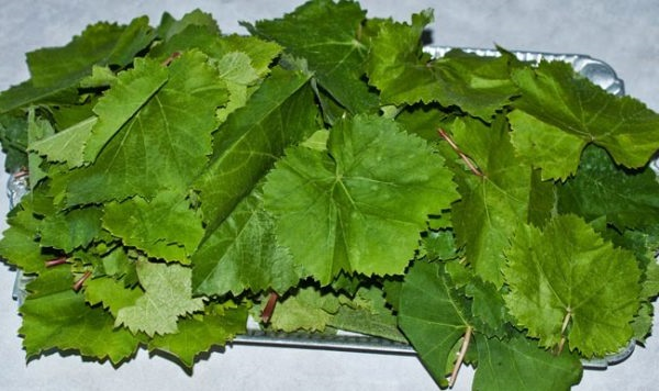 Збір виноградного листя