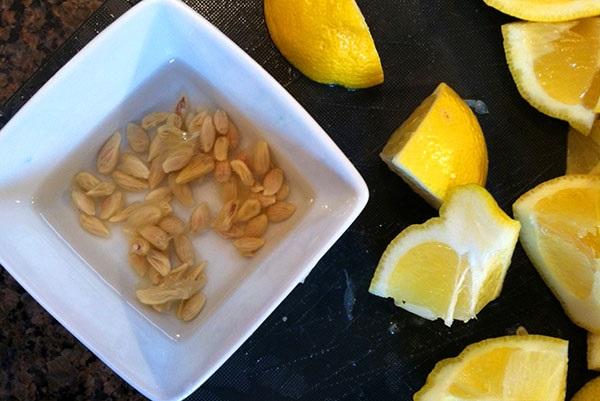 як посадити лимон