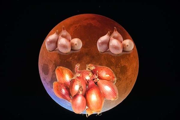 Посадка цибулі за місячним календарем