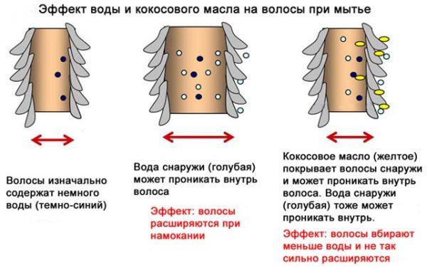 користь кокосового масла для догляду за волоссям