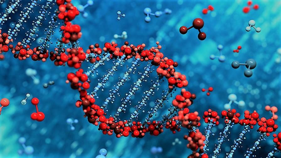 Вплив генетики на зайву вагу