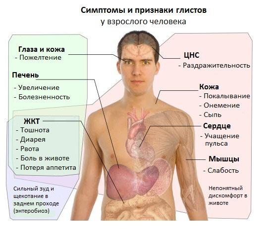 паразити в організмі людини