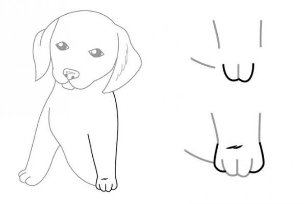 як намалювати собаку крок за кроком