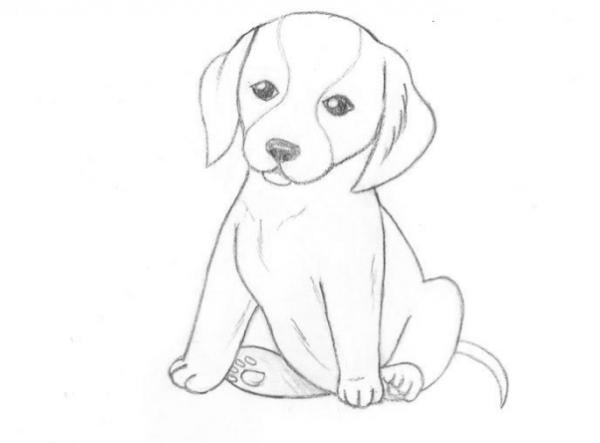 як намалювати собаку олівцем