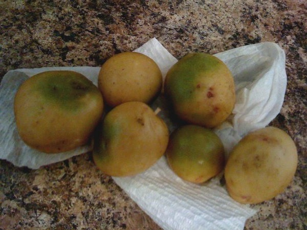 У чому небезпека зеленої картоплі