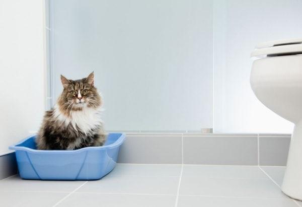 Як відучити кота гадити в недозволеному місці