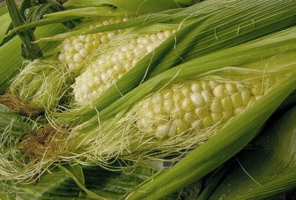 кукурудзяні рильця лікувальні властивості