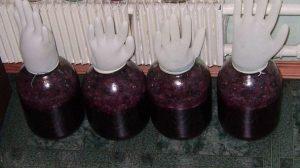 домашнє виноробство з вишень