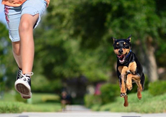 Що робити, якщо дитина боїться собак