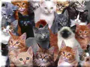 як вибрати кошеня