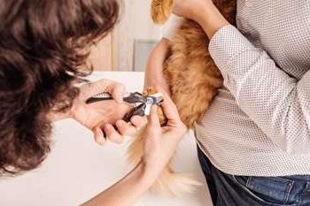 чи можна обрізати нігті кошеняті