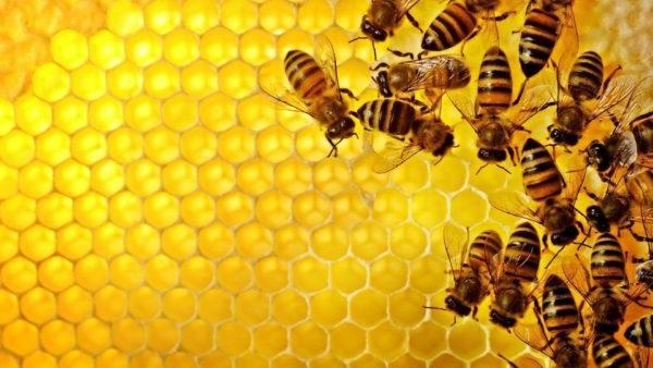 як визначити підробку меду