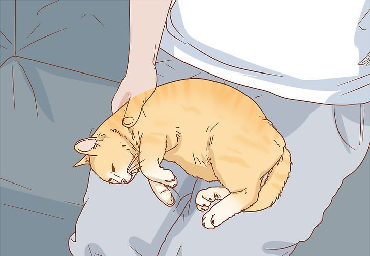 лікування коліту в котів