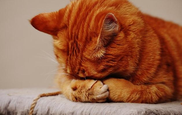 Коліт у кішок