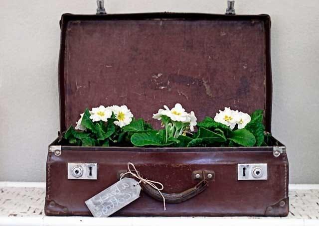 горщик з старого чемодану