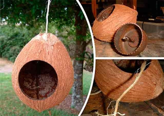 годівниця з кокоса