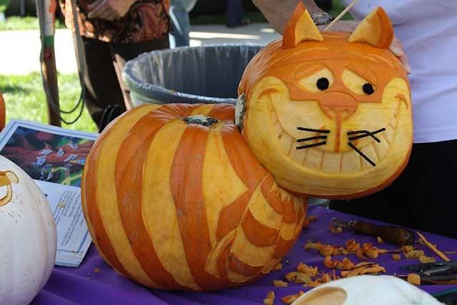 кіт з гарбуза