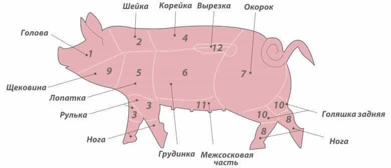 свиня частини схема