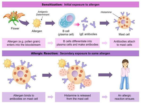 алергія поліноз