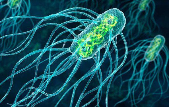 черевний тиф бактерія