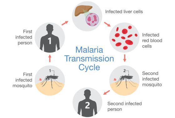 малярія епідеміологія