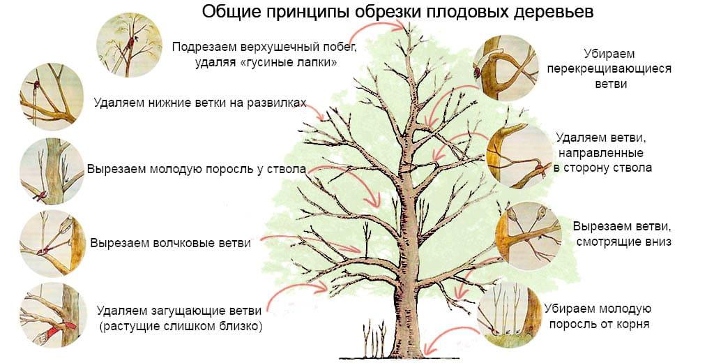 як обрізати дерева