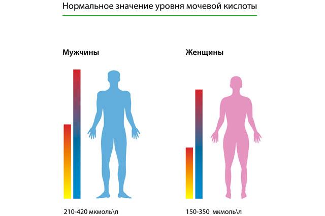 сечова кислота норма