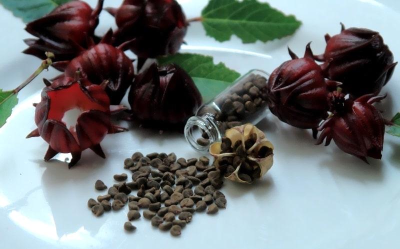 Розмноження гібіскусів насінням