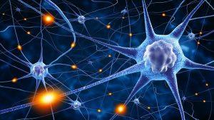Цікаві факти про нервовову систему