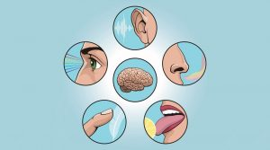 Цікаві факти про органи чуття