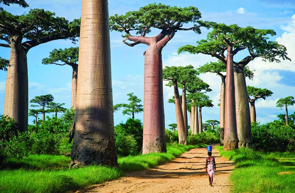 Цікаві факти про Мадагаскар