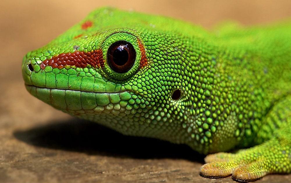 цікаві факти про рептилії