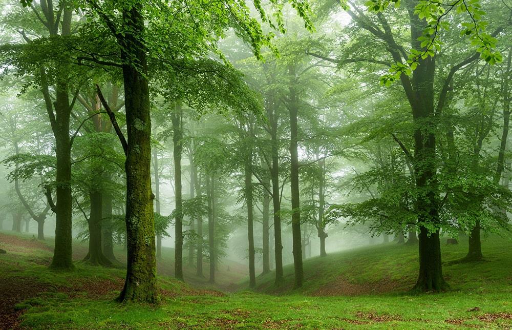 Цікаві факти про ліса і дерева