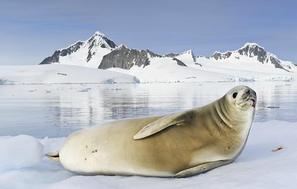 Цікаві факти про тюленів