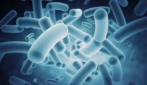 Цікаві факти про бактерії