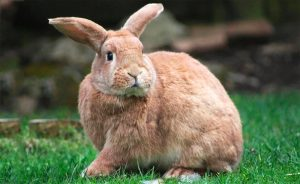 Цікаві факти про кроликів