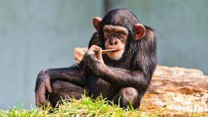 Цікаві факти про мавп