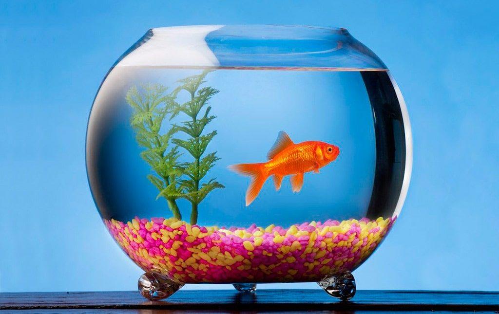 Цікаві факти про акваріуми
