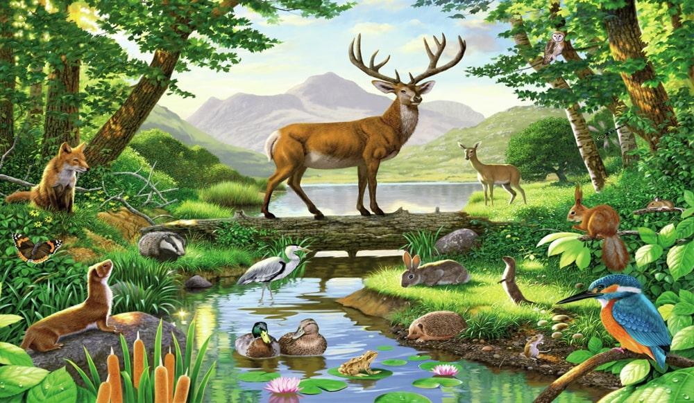 Цікаві факти про лісових тварин