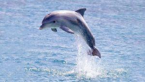 Цікаві факти про дельфінів