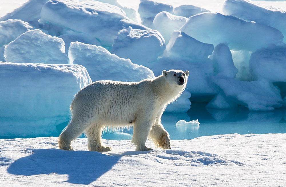 Цікаві факти про Великий Арктичний заповідник