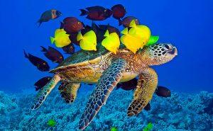 Цікаві морські факти