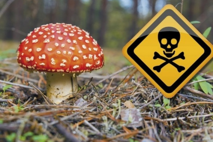 симптоми отруєння грибами