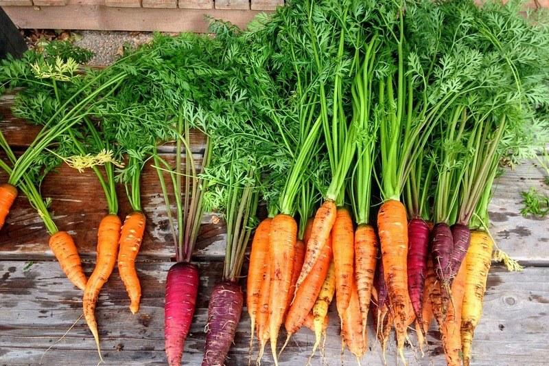 бадилля моркви користь