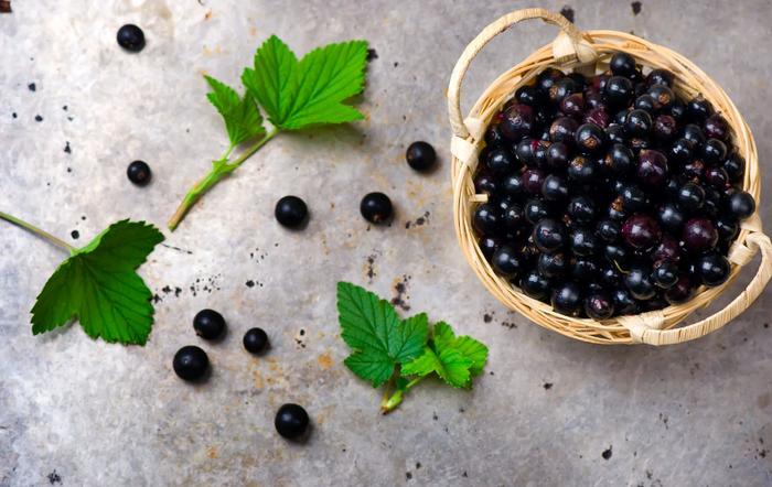 листя чорної смородини корисні властивості