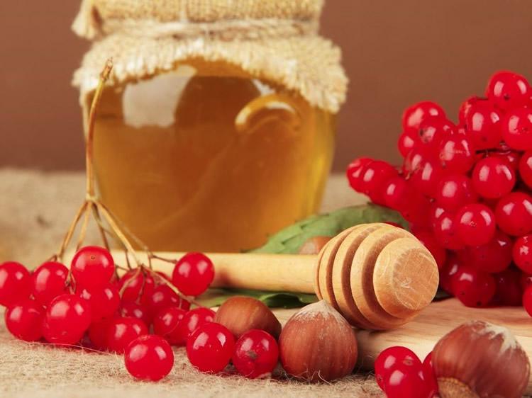 калина з медом корисні властивості