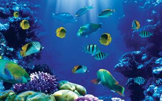 загадки про риб